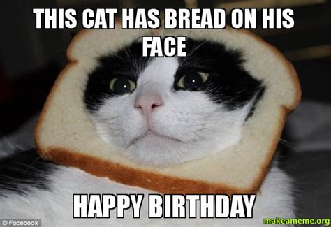 Birthday Cat Meme Generator - meme happy birthday cat funny meme pinterest