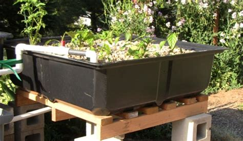 aquaponics grow bed grow beds aquaponics images