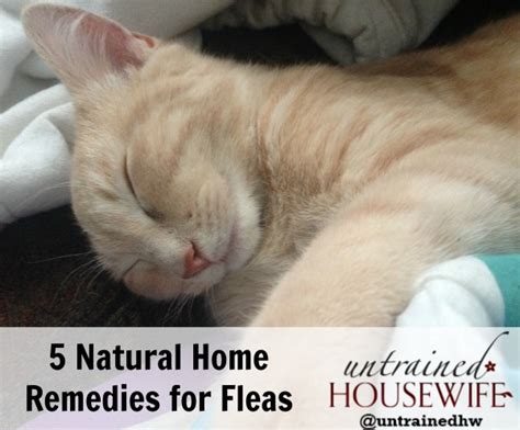 5 home flea remedies that actually work