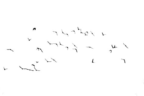 Daun Paya Black 1 bird silhouette1 by frankandcarystock on deviantart