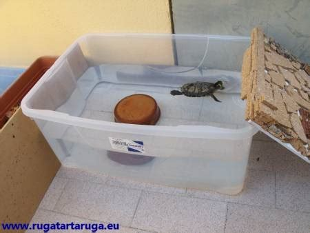 vasche x tartarughe ruga tartaruga cosa mangia dove vive quanta acqua vuole