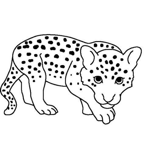 leopard coloring pages print coloring