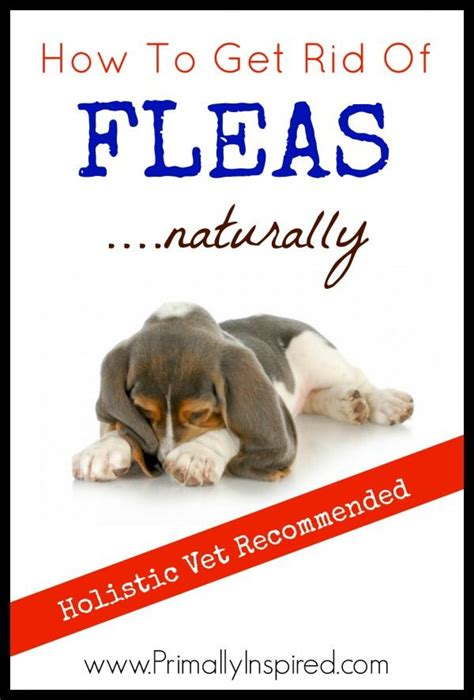 flea how to get rid of fleas naturally