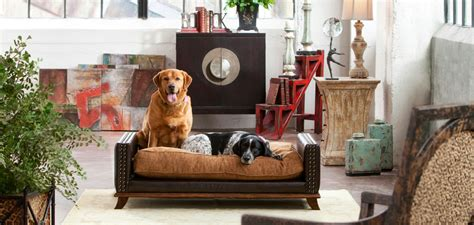tips  pet friendly homes  decorative