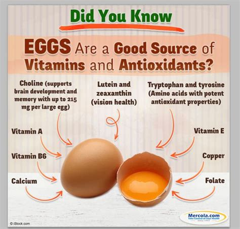 the health benefits of organic eggs the health benefits of eggs food pinterest heart
