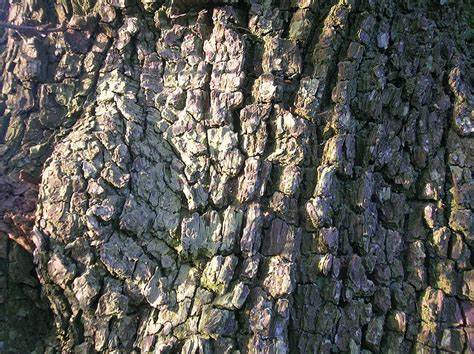 Trees That Shed Their Bark by Trees That Shed Their Bark Things About Trees