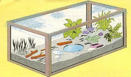 imagenes de terrarios escolares animales como hacer un terrario