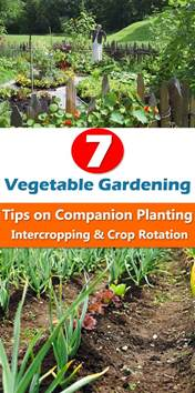 Vegetable Garden Planting Ideas 7 Vegetable Gardening Tips On Companion Planting Intercropping Crop Rotation Balcony Garden Web