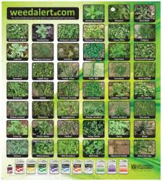the best black friday deals 2017 for laptops online free weed alert poster co name