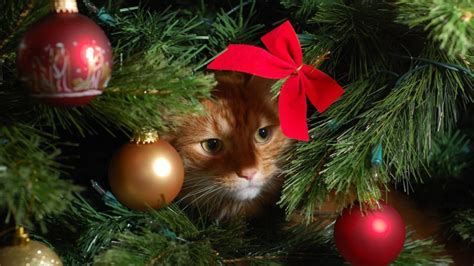 how to avoid a christmas tree cat astrophe this festive season