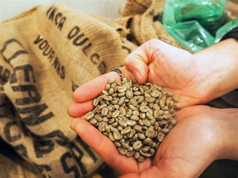 klasifikasi green beans  grade coffee majalah otten coffee