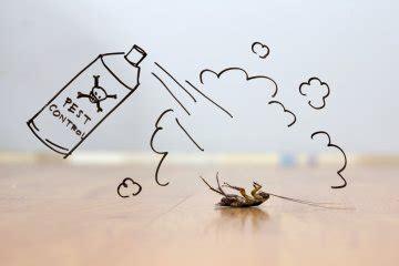 formiche volanti come eliminarle come eliminare gli insetti in casa pianetadonna it