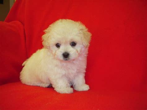puppy town puppy town sold
