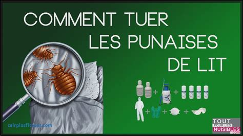 Punaise De Lit Piqure Traitement by Punaise De Lit Traitement Related Keywords Punaise De