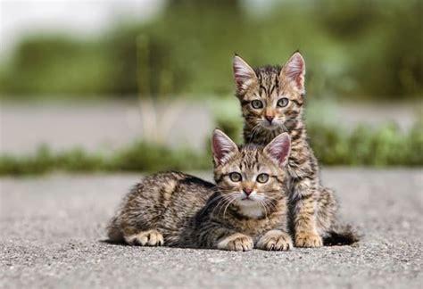 helping homeless cats   summer petmd