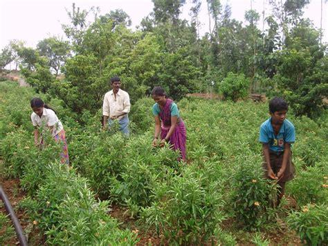 meeting multiple   small farmers leisa india