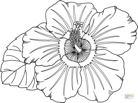 luau flower coloring page hawaiian flower coloring pages coloring home