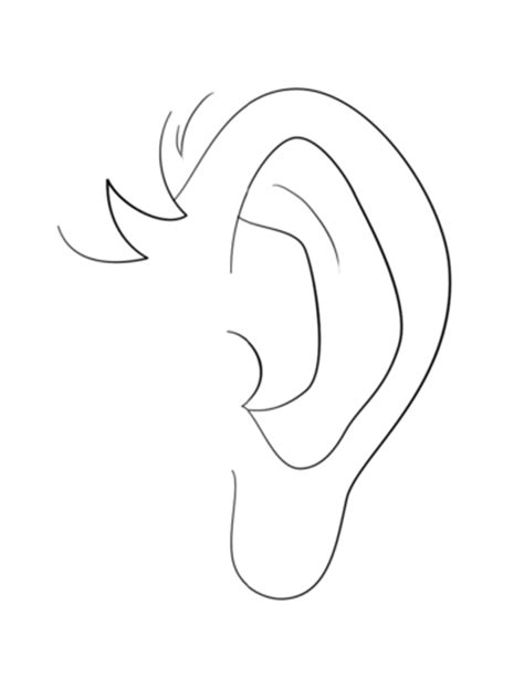 human ear coloring page human ear coloring page free printable coloring pages