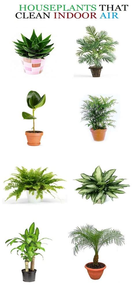 list of air purifying plants natural remedies pinterest plants gardens and indoor