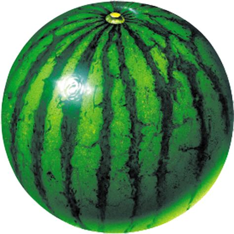 Semangka Vektor watermelon prober appstore for android