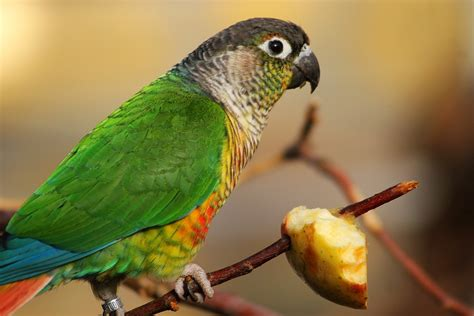 sunshine for the eye and nutrition for the parrot body