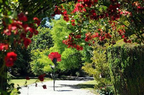 Beautiful Magnolia Trees Picture Of Christchurch Botanic Christchurch Botanic Gardens