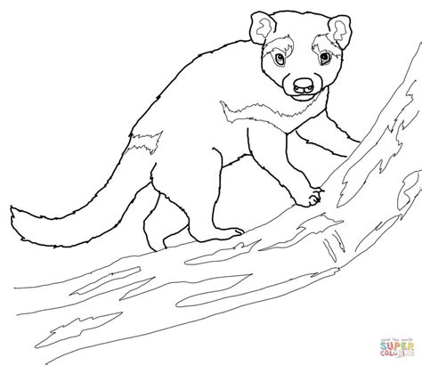 tasmanian devil on a tree coloring page free printable
