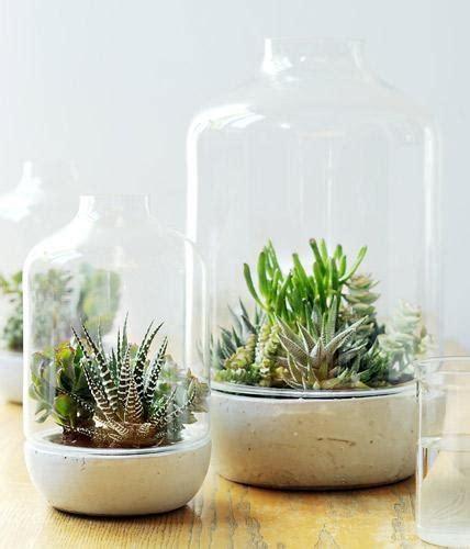 pflanzen deko deko ideen pflanzen