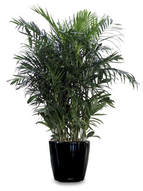 top indoor plants  air filters  homeindoor air pollution top indoor plants  air