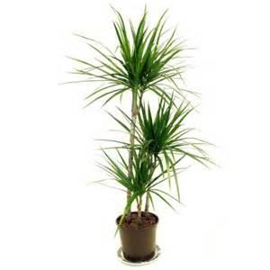 Indoor House Plants For Sale Home Decorating Ideas Low Maintenance House Plants Rent