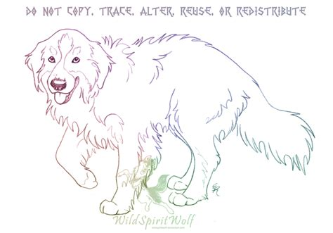 coloring pages of bernese mountain dogs bernese mountain dog sketch by wildspiritwolf on deviantart