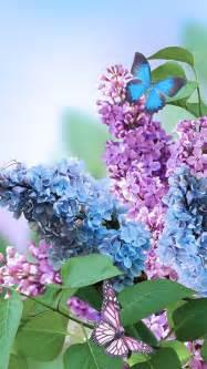 sfondi iphone fiori sfondo primavera fiori lilla per iphone sfondi hd