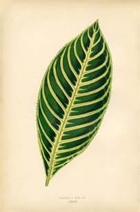 vintage printable botanical leaf instant art the