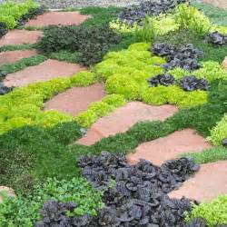 landscaping ground cover ideas 17 best ideas about succulent ground cover on