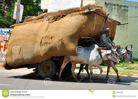 indian cart indian bullock cart editorial image image of cart mammal