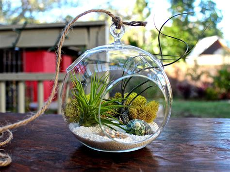 Hanging Herb Planter by Hanging Terrarium Bubble Glass Air Plant Containers Pots