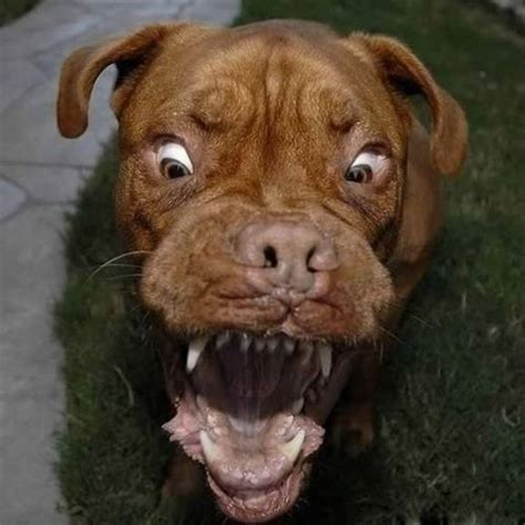 scary looking dogs top 6 scariest looking dogs