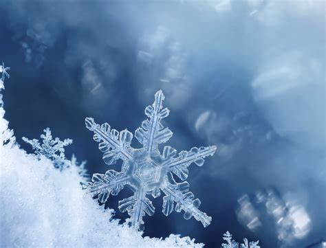 snow pictures more snow expected for lower mainland news 1130