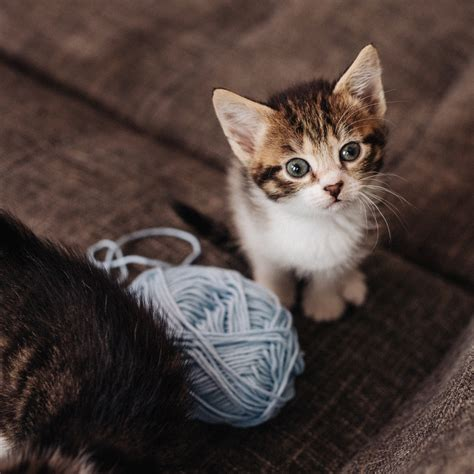 Cat Co Wellness Kitten 15kg cat health animal friends