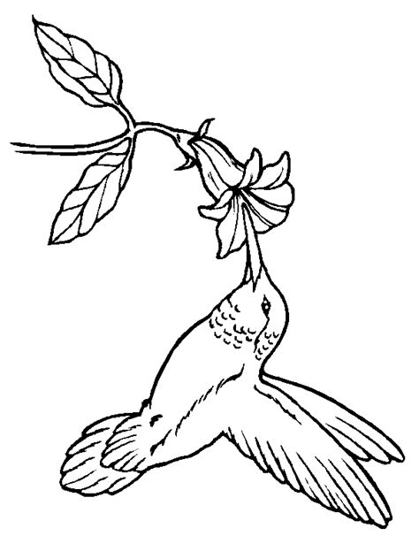 Lisy Top Putih Hitam Nl coloring pages animals realistic simple colouring