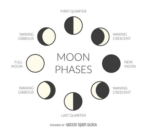 phases of the moon diagram to label illustrated moon phases vector