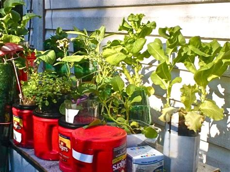 recycled containers for gardening recycled container garden grow