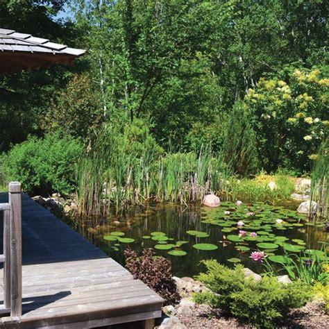 backyard pond maintenance 25 best ideas about pond maintenance on pinterest