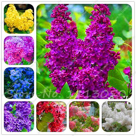 pianta lilla in vaso lilla pianta promozione fai spesa di articoli in