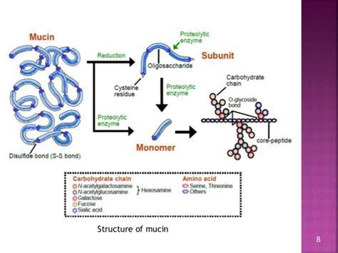 generic structure biography text generic structure dari biography bio mucoadhesive drug