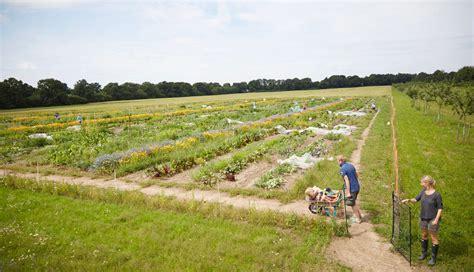Garten Mieten by Garten Mieten Organic Gardening
