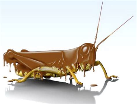 chocolate covered crickets   Pepper Steak & Polyester