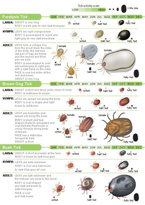 Bed Bug Prevention Spray Ticks Faq St Ives Veterinary Surgery
