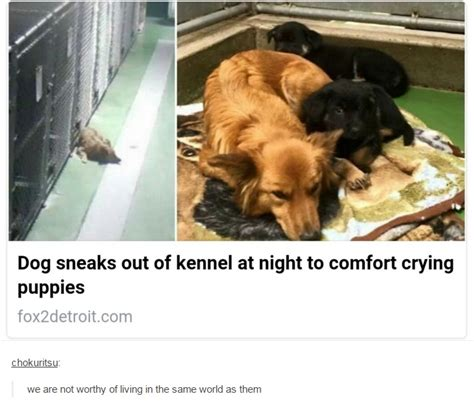 Crying Dog Meme - dog sneaks out of kennel at night to comfort crying