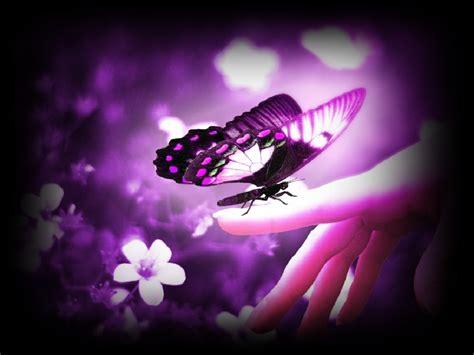 imagenes de mariposas que brillen de las mariposas de vez en cuando la vida te besa en la boca